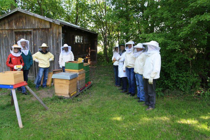 Probeimkern 2012 - Bienenstand