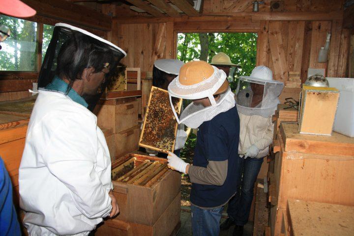 Probeimkern 2012 - Bienenhaus