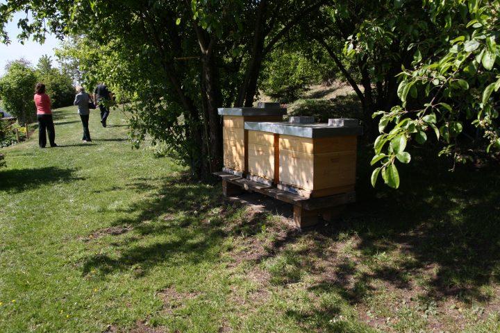 Probeimkern 2011 - Bienenvölker